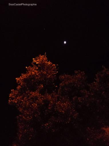 L'albero d'oro, luna, stella