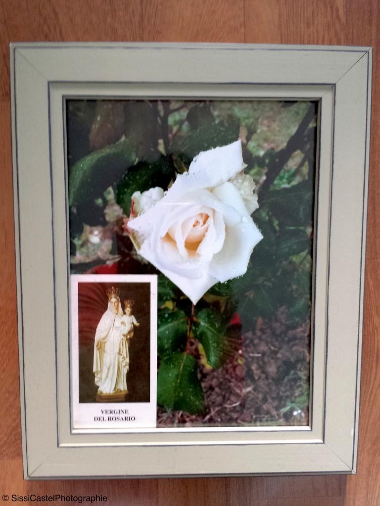 Pezzo n.7 - rosa naturale