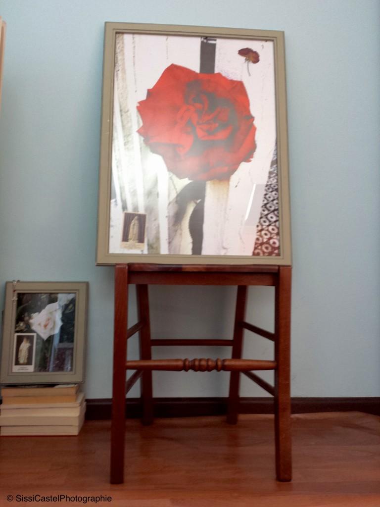 Rosa n.1