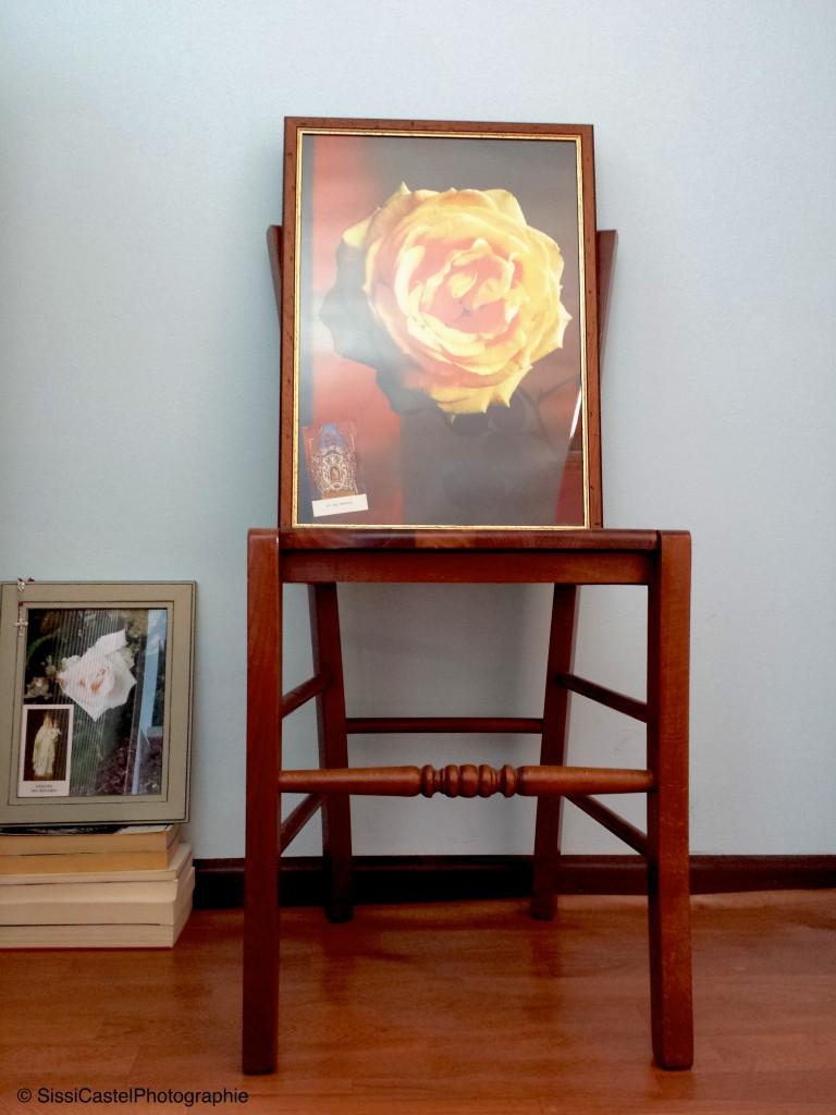 Rosa n.8