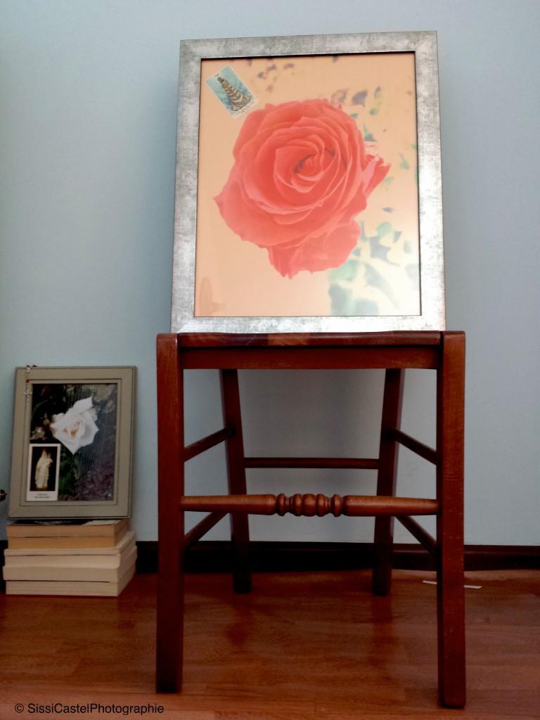 Rosa n.9 copia