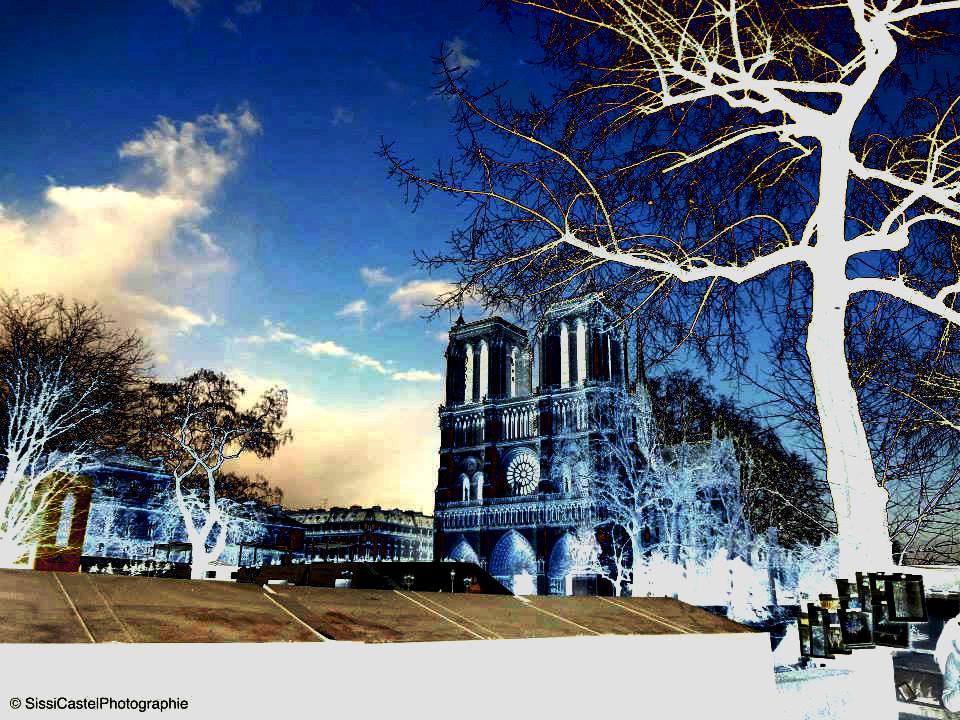 Notre Dame, negativi