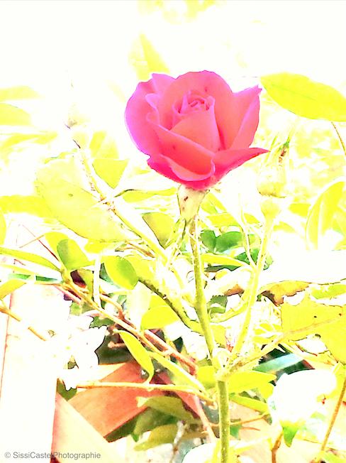 psichedelie- rosa n.84 blog